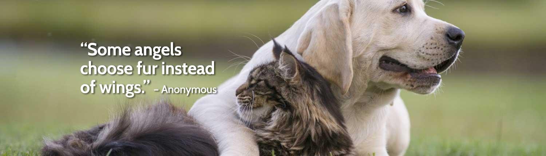 Pet Rehabilitation banner