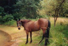 Testimonial Horse