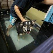 Water Treadmill Dog