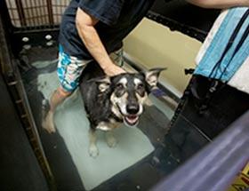 Pet Rehabilitation Treadmill