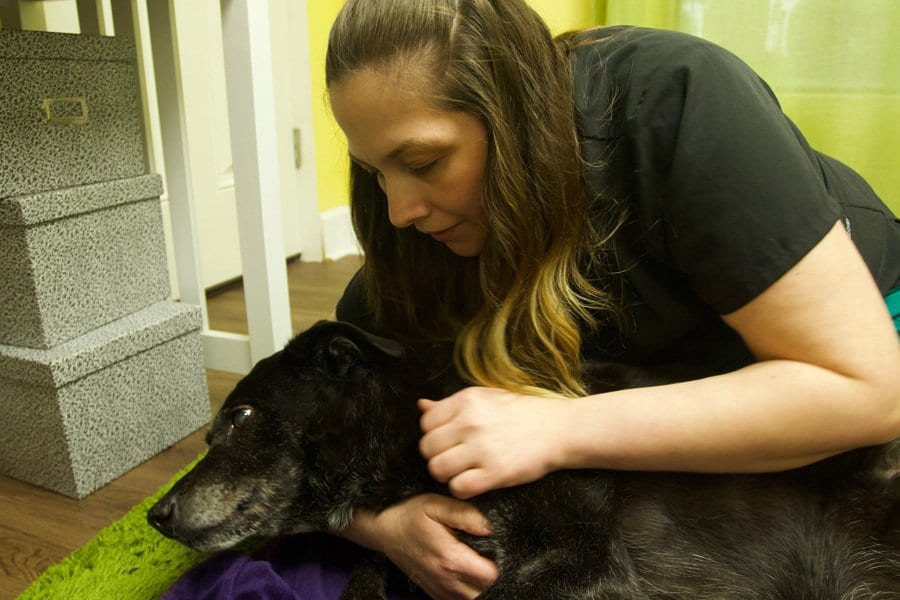 massage therapy for dogs in Portland